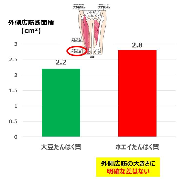 外側広筋断面積_ベジタリアンの筋肉
